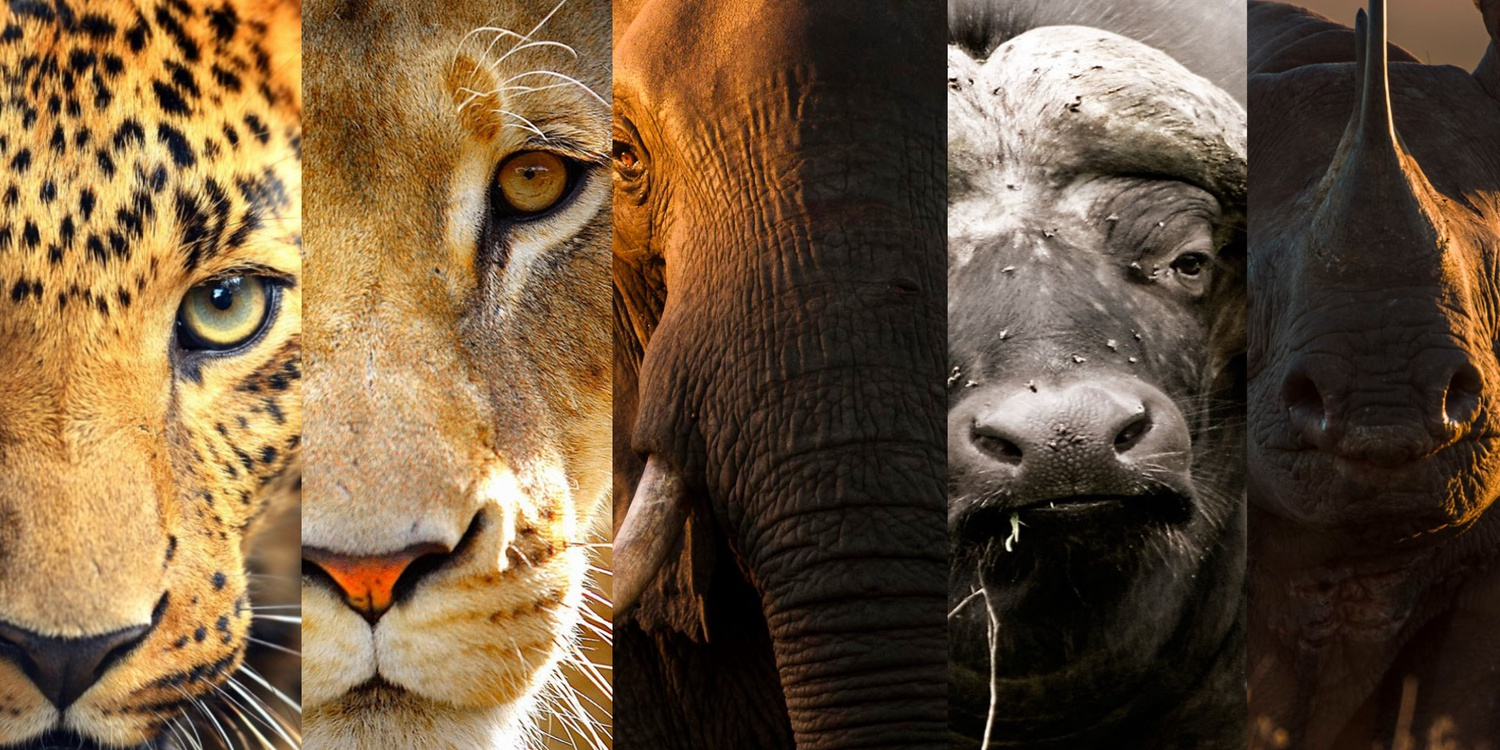 Experience Africa's Big Five